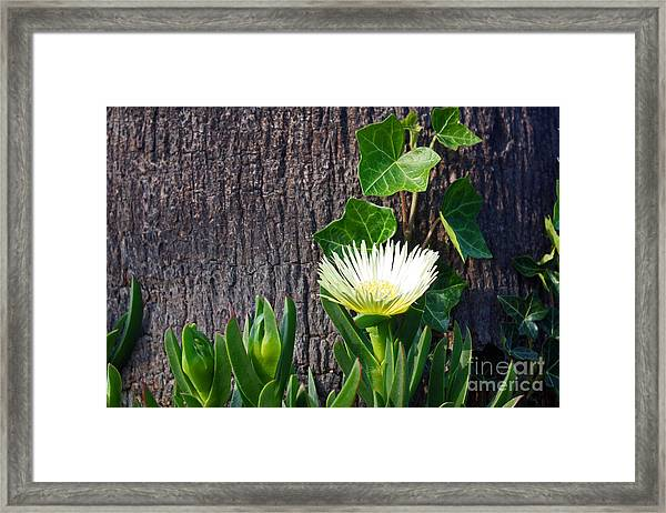 Ice Flower With Vine Framed Print
