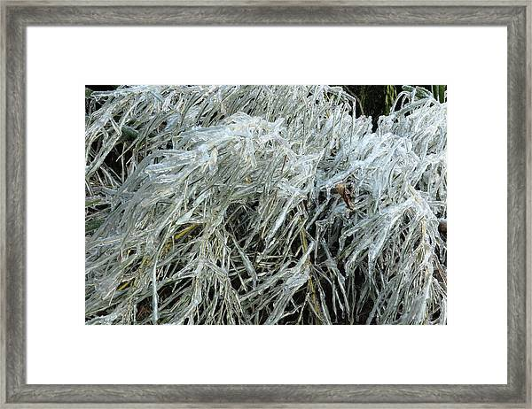 Ice On Bamboo Leaves Framed Print