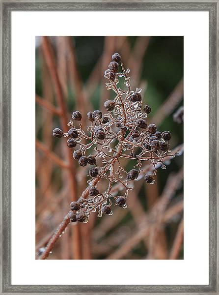 Ice On Berries Framed Print