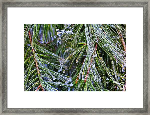 Ice On Pine Needles  Framed Print