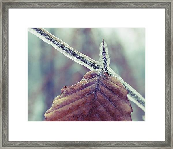 Framed Print featuring the photograph Ice Storm by Candice Trimble