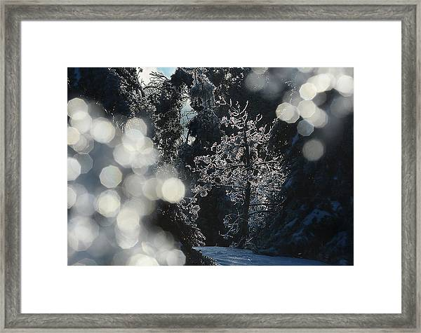 Ice Tree-5074 Framed Print