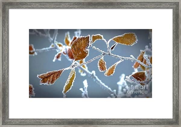Ice Vines Framed Print