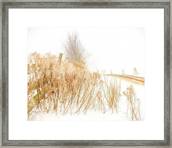Iced Goldenrod At Fields Edge - Artistic Framed Print