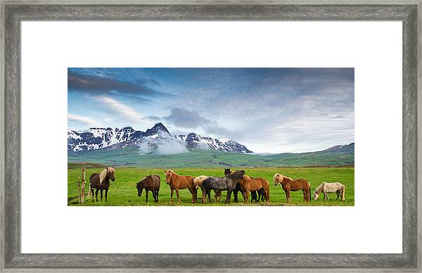 Icelandic Horses In Mountain Landscape In Iceland Framed Print
