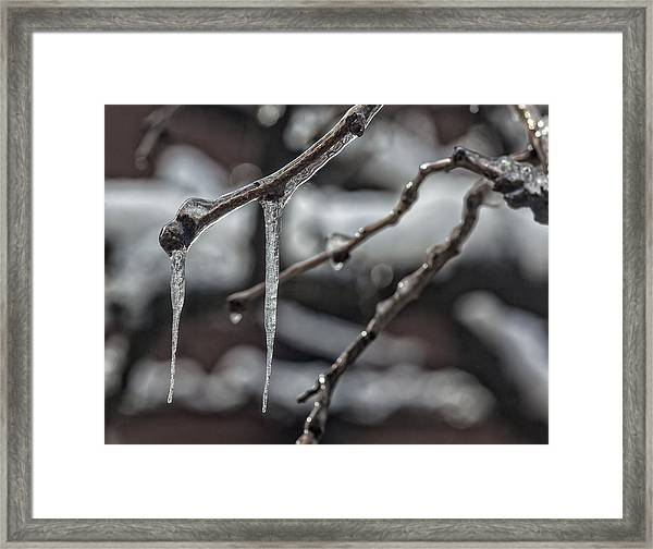 Icicles On Branch Framed Print
