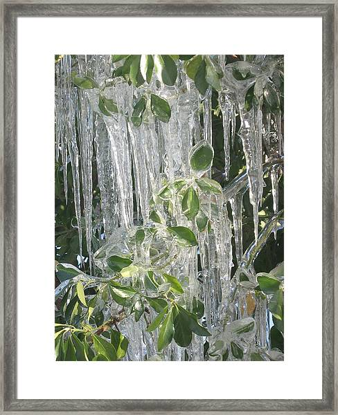 Icy Green Framed Print