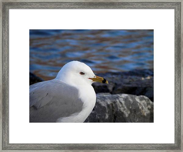 If Only You Could See The World Through My Eyes Framed Print