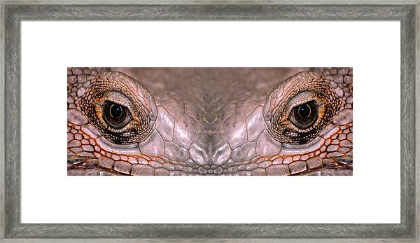 Iguana Eyes Framed Print