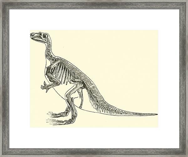 Iguanodon Framed Print