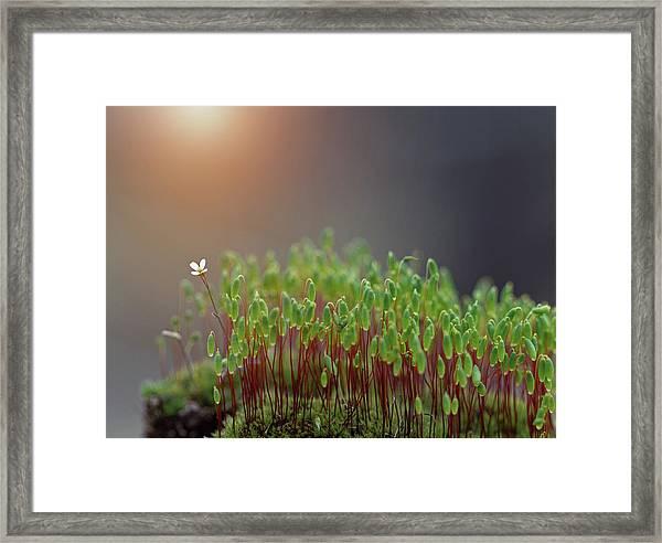 ...*\.i`ii``ii``i Framed Print by Dimitar Lazarov -