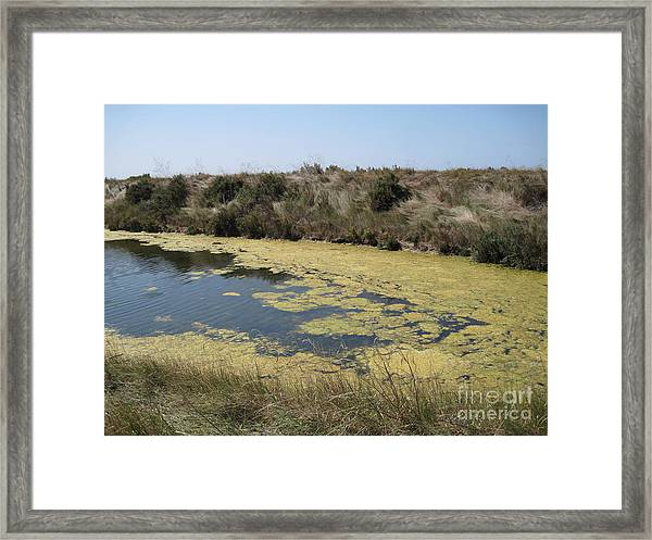 Ile De Re - Marshes Framed Print