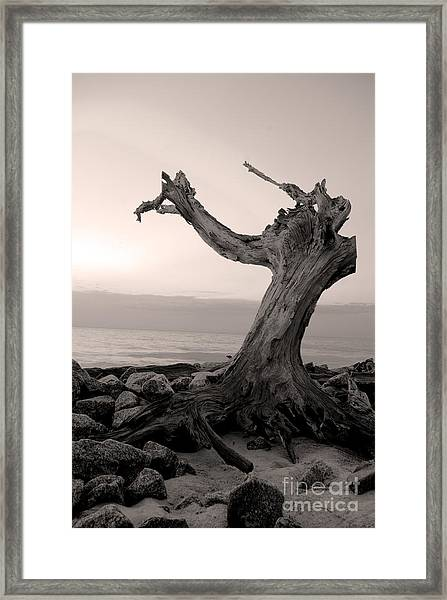 Framed Print featuring the photograph I'll Find You by Glenda Wright