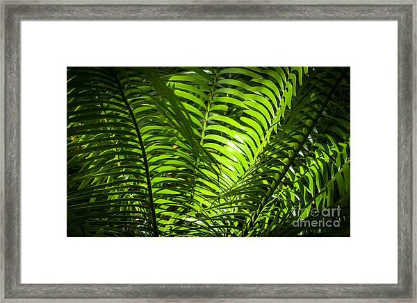 Illuminated Jungle Fern Framed Print