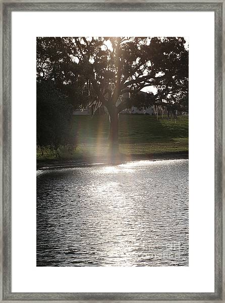 Illuminated Tree Framed Print