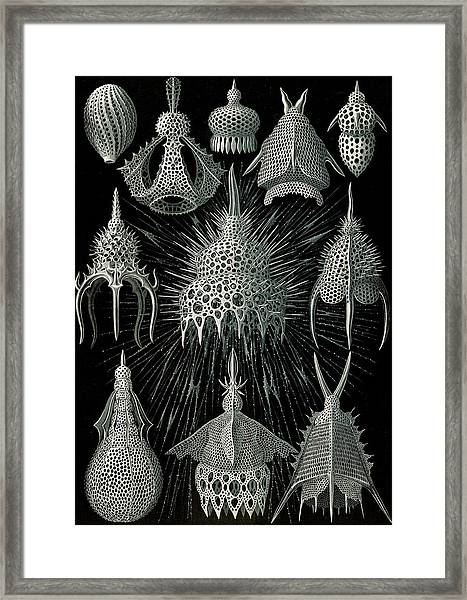 Illustration Shows Microorganisms In The Class Radiolaria Framed Print by Artokoloro