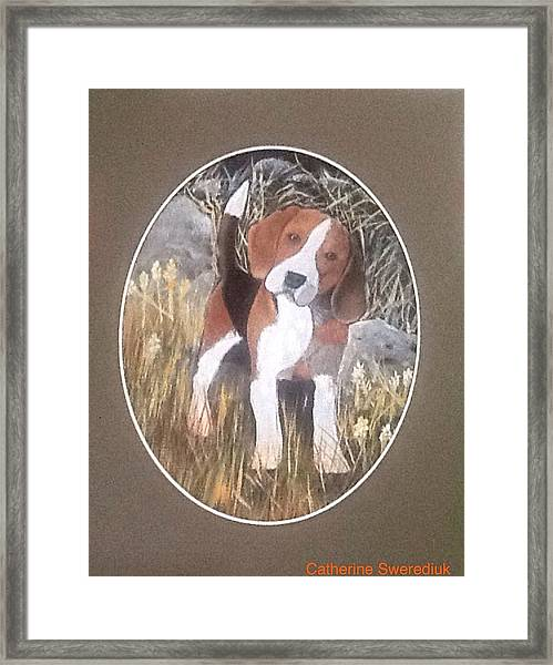 I'm Just A Puppy Framed Print by Catherine Swerediuk