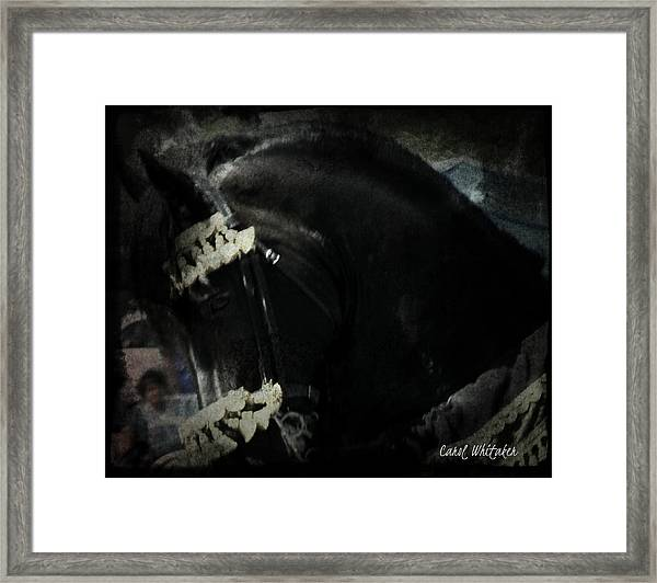 Imperial Friesian Framed Print
