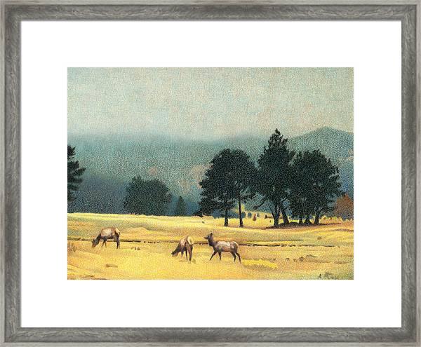 Impression Evergreen Colorado Framed Print