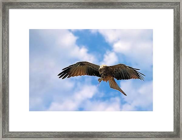 In Flight Meal Framed Print
