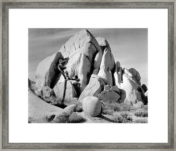 In Joshua Tree National Monument 1942 Framed Print by Ansel Adams