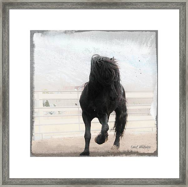 In Joy Framed Print