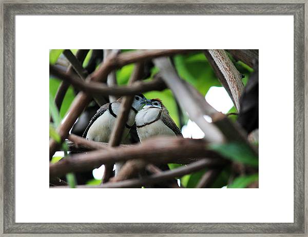 In Love II Framed Print