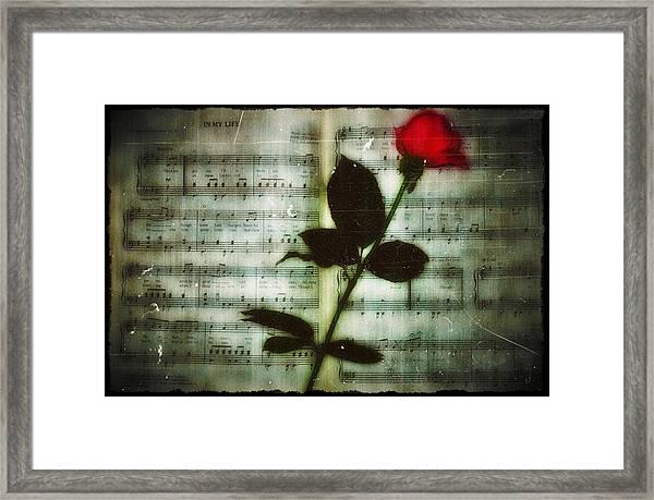 In My Life Framed Print