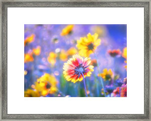 In Summer The Song Sings Itself Framed Print