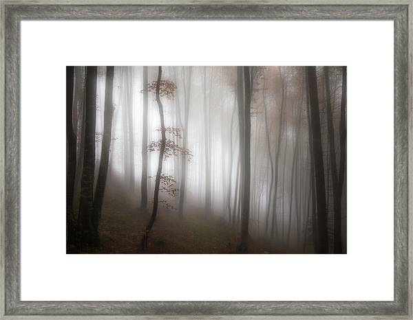 In The Forest..... Framed Print