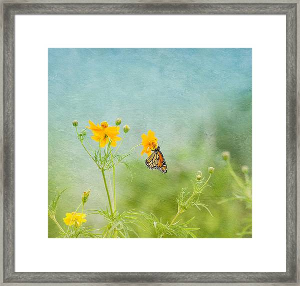 In The Garden - Monarch Butterfly Framed Print