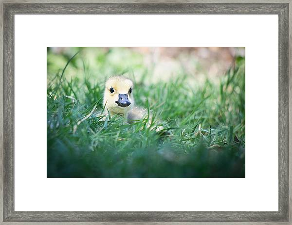 Framed Print featuring the photograph In The Grass by Priya Ghose