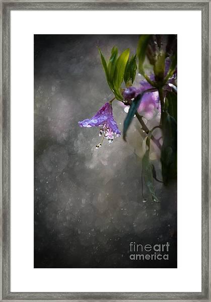 In The Morning Rain Framed Print