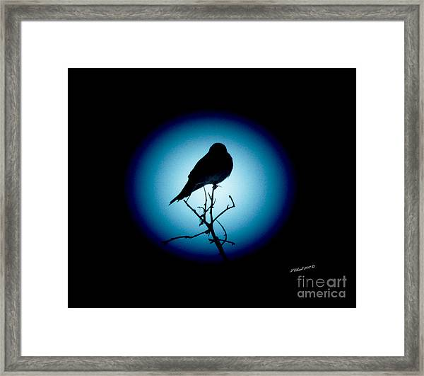 In The Spotlight Framed Print by Timothy Clinch