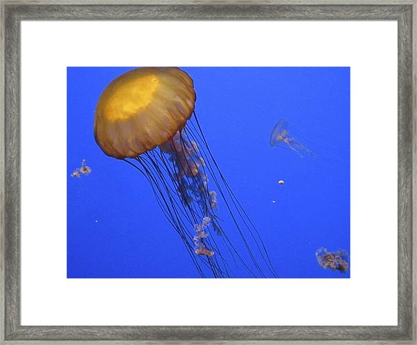 In The Tank Framed Print