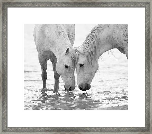 In The Water At Dawn II Framed Print