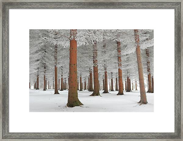 In White Framed Print by Dragisa Petrovic