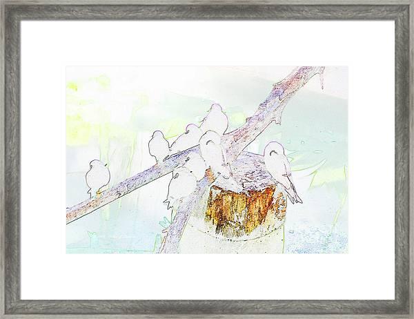 Inca Terns Framed Print