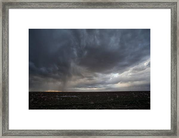 Incoming Storm Over A Cotton Field Framed Print