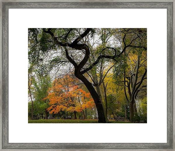Independent Trees Framed Print