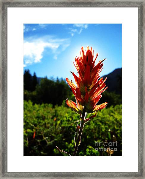 Indian Paintbrush Sunrise Framed Print