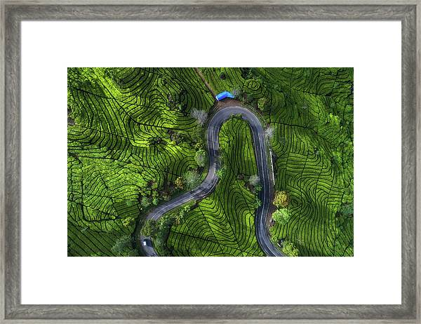 Indonesia - Rancabali Tea Aerial Framed Print