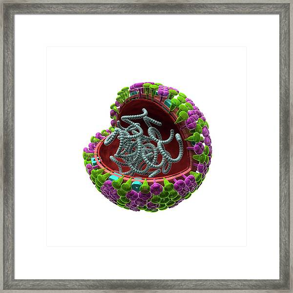 Influenza Virus Structure Framed Print by Harvinder Singh