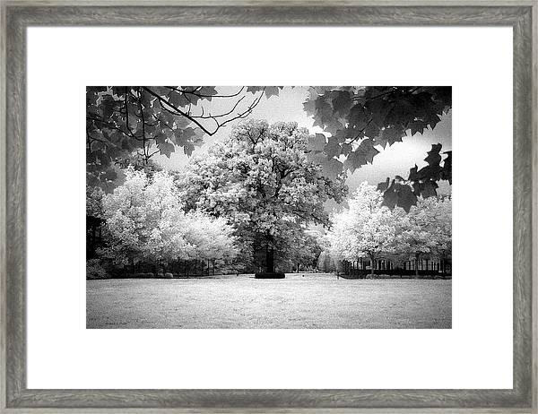 Infrared Majesty Framed Print