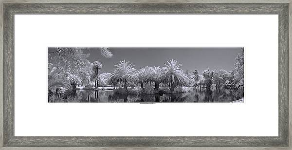 Infrared On A Sunny Afternoon Framed Print