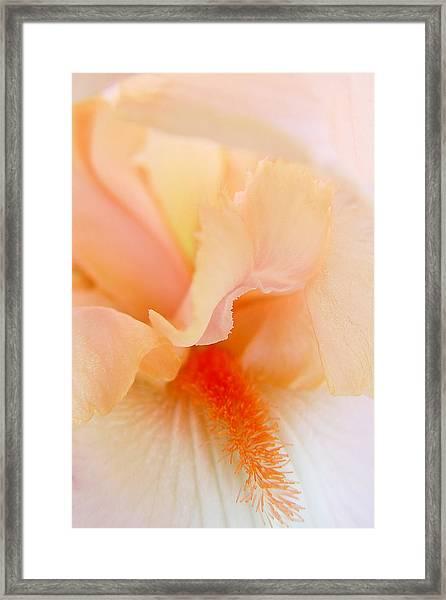 Inner Iris 1 Of 4 Framed Print