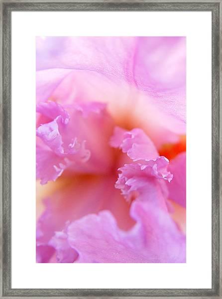 Inner Iris-2of4 Framed Print