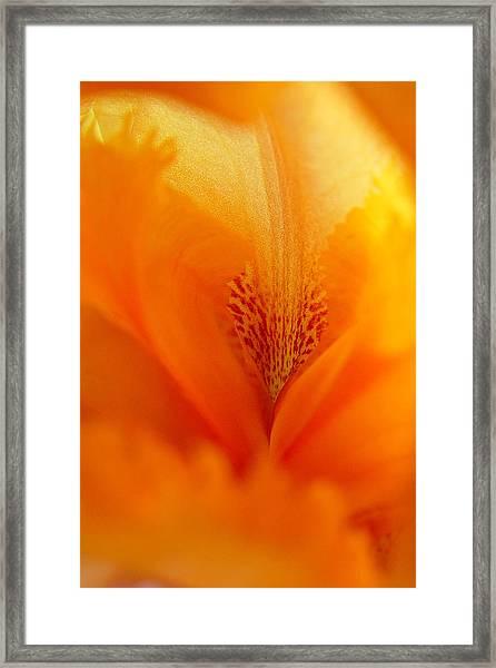 Inner Iris 3 Of 4 Framed Print
