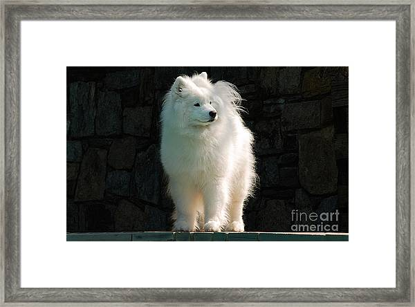 Framed Print featuring the photograph Intent by Lois Bryan