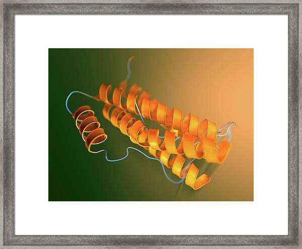 Interleukin-6 Molecular Model Framed Print